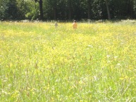 Struinen door het hoge gras